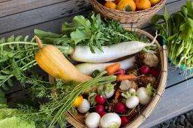 田舎で野菜の収穫(^O^)/